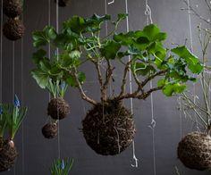 De hangende tuinen