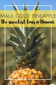 Maui Gold Pineapple Tour in Maui, Hawaii. The only pineapple tour in the United States. Hawaii Vacation Tips, Hawaii Tours, Trip To Maui, Family Vacation Destinations, Maui Hawaii, Vacation Ideas, Vacation Food, Girls Vacation, Hawaii Life