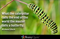 Richard Bach Quotes - BrainyQuote