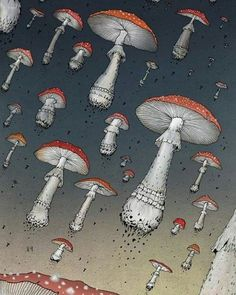 how to take dried shrooms