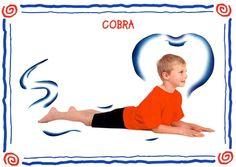 cobra modèle