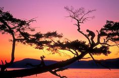 tall tree and man silhoette | picture of Person Climbing Tree Image