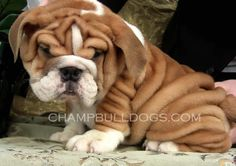 love all of the wrinkles!