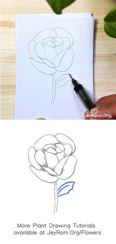 How to Draw a Rose : Step by Step for Beginners — JeyRam : Art Roses Drawing Tutorial, Flower Drawing Tutorials, Rose Tutorial, Drawing Projects, Beginner Drawing, Drawing For Beginners, Rose Step By Step, Step By Step Drawing, Rose Drawing Simple