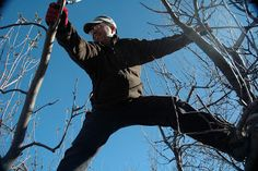 Provo, learn to prune in your own back yard!