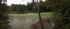 College Station Swamp