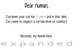 A Very Important Letter From Your Cat – 40 Pics