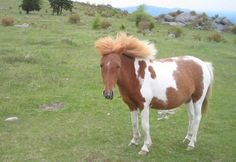 images of ponies | The almost-constant winds of Wilburn Ridge create a new hairdo.