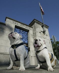 The Citadel has two bulldog mascots, Boo and General, whose main duty is to provide morale for the Corps of Cadets, faculty and staff and all of the Bulldog athletic teams. Other duties include barking at opposing teams, eating numerous dog biscuits throughout the day and being pampered by the cadets that help take care of them while school is in session.