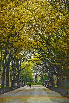 Central Park <3