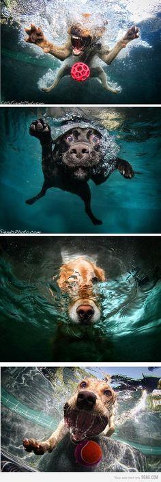 Seth Casteel-Underwater dogs