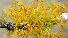 Lichen, lovely lichen~<3~so delicate