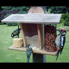 Mangeoire murale pour oiseaux - Restaurant