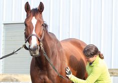 Speed Grooming: Take your horse from grubby to gorgeous in no time.