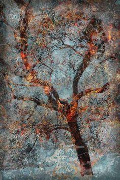 Misted (c) 2010 Liz Ruest