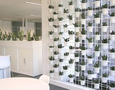 What's Out There Wednesday........Vertical Garden Living Wall and Air Plants!   Sallygoodin