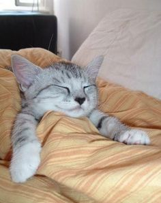 ( ͒ ु-·̫- ू ͒)  #neko #cat