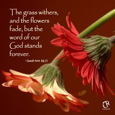 The grass withers, and the flowers fade, but the word of our God stands forever. - Isaiah 40:8 (NLT) Bible verse | CrossRiverMedia.com