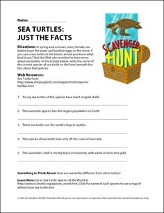 Lesson 5 Turtles  Accredited Online School