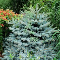 Hedgerows and dense plantings provide birds and other small critters shelter from predators and the elements. Native trees and shrubs offer ideal spots for tending and raising young. Even a thick tangle of perennials and tall grasses can provide adequate protection when predators are near. In the garden shown here, Colorado blue spruce, butterfly weed, and switchgrass offer dense cover. Brush piles give critters alternative habitats. Leave trimmings from trees and shrubs in an…