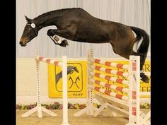 www.sporthorses-online.com 2008 Hanoverian mare by Stakkato 16.2 hh for sale - YouTube