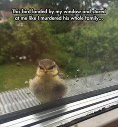 Top 30 Very Funny Animals Memes #Humor pics