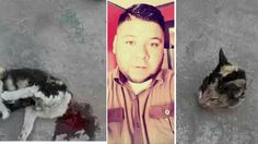 Mexican rips kitten's head off and publishes photos on Facebook! Act Now!