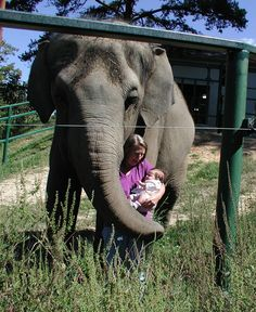 Elephant asian baby