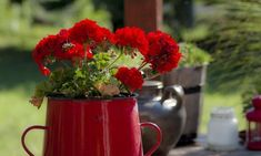 Free Photographs, Free Photos, Organic Gardening, Gardening Tips, Moscow Mule Mugs, Raised Garden Beds, Amazing Gardens, Vegetable Garden, Home And Garden