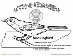 Tennessee State Bird Mockingbird Coloring Page