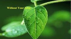 Roger Daltrey - Without Your Love - YouTube