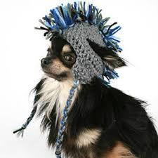 Resultado de imagen para Gorros tejidos para perros grandes