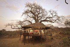 Wauw! Bij Tarangire Treetops in Tanzania slaap je in boomhutten. Hier heb je geen speciale familie tenten maar zeg nou zelf; dit is toch uniek! Het camp is gelegen in het Tarangire National Park, waar je begroet wordt door de Maasai.