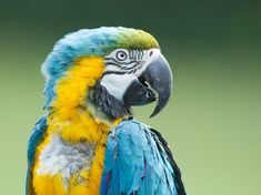 Parrots and stress | Pets4Homes