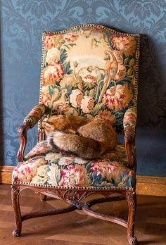 Le fauteuil du renard