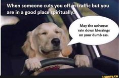 56 Hilarious Dog Memes That will Make you Smile Every time you See them! Dog Memes, Funny Memes, Hilarious, Jokes, Funny Quotes, Spirit Science, Science Humor, Rain Meme, Funny Spiritual Memes