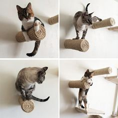 The folks over at CatastrophiCreations have outdone themselves this time! Just look at these awesome sisal wrapped cat climbers and scratchers. How cool are these? First we have a Dr. Suessian sisal cat tree. Twisting pipes are covered in thick natural sisal rope, creating a vertical pole for climbing straight up and a nice easy ramp…