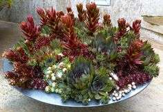 Mix of succulents