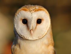 O RLY?! by Roeselien Raimond on 500px