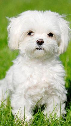 #Cute Dog