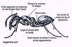Severe Bed Bug Infestation Holly Crap Welcome To My