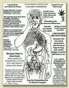 #Read and learn  ( marijuana cannabis )    Like, repin, share Peace!    Welcome cannabis destiny & bran kovvvitch!!