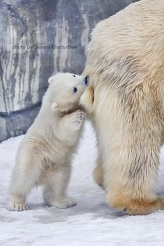 Mammy is always tasty by sergei gladyshev on 500px