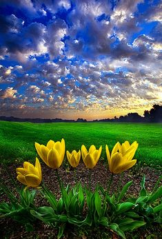 What Kind of World do You Want by Phil Koch