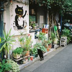 Plants and cats Image Chat, Japan Street, Graffiti, Maneki Neko, I Love Cats, Scenery, Landscape, Drawings, Pictures