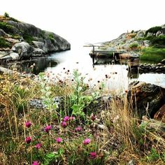 The island Fotö in the Gothenburg Archipelago, ooh to have a creek all to yourself!!