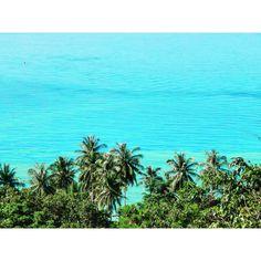 Where the palms meet the sea.. 🌊🌴✨