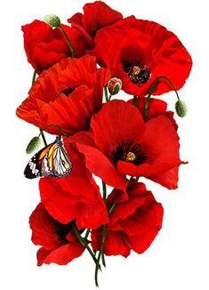 Corn Poppy Seeds / Red Poppy (Papaver rhoeas) – World of Flowers Colorful Flowers, Beautiful Flowers, Poppy Flowers, Exotic Flowers, Red Poppy Tattoo, Poppy Tattoo Small, Poppy Drawing, The Tiny Seed, Poppies Tattoo