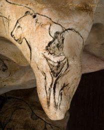 chauvet cave art prints - Google Search Chauvet Cave, Stone Age Art, Power Animal, Moose Art, Paintings, France, Art Prints, Google Search, Animals