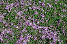 Végétaux aux propriétés bienfaisantes  Suite à notre article sur les plantes dépolluantes pour le sol, il était important de montrer que des plantes depuis des siècles, et même plus, ont la faculté de dépolluer notre organisme humain…  Quelques mètres carrés de potager ou quelques pots ou bacs sur notre balcon feront un merveilleux réservoir de bien-être.  Nous n'avons pas la prétention, bien évidemment, de faire des prescriptions d'ordre médical, mais simplement ici rappeler avec du bon…